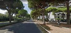 Pini sui cigli delle strade nelle città europee