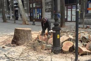 Molti grandi alberi sono stati sacrificati, nelle città, per favorire il 5G