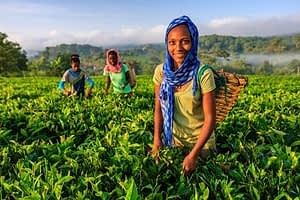 donne agricole Africa