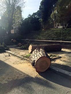 taglio pini - Roma