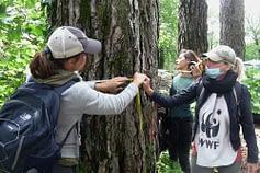 censimento pini neri Monte Faito Campania - WWF Terre del Tirreno
