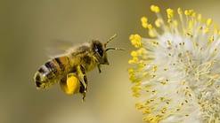 pollini - ape