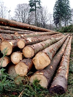 foreste di alberi abbattuti