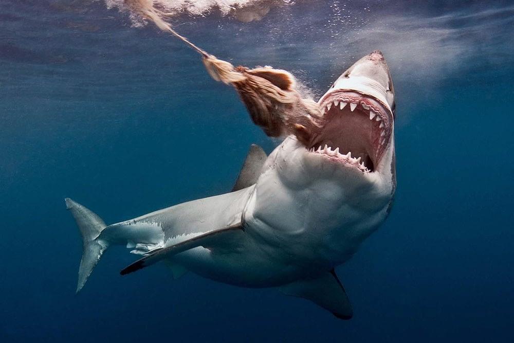Mediterraneo - mattanza squali