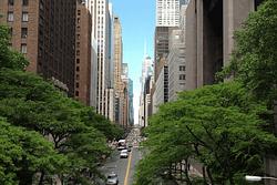 gestione urbana verde