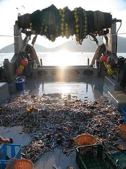 Mar Mediterraneo Pesca a strascico, Spagna - Oscar Esparza WWF-Spain