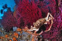 biodiversità Mar Mediterraneo