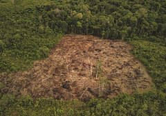 deforestazione