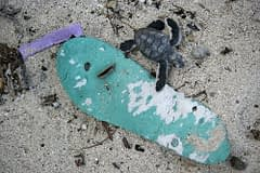 Mar mediterraneo cucciolo di tartaruga