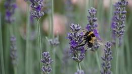 Biodiversità: impollinatori