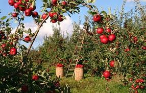 settore alimentare sostenibile