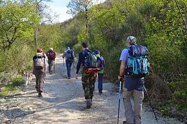 trivelle sostenibili - passeggiate nei boschi