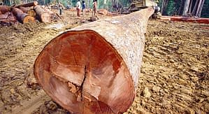 foreste - tronco albero