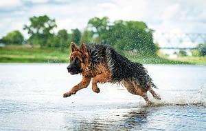 Portare i cani a passeggiare e correre all'aperto, fa stare i padroni più tempo a contatto con la natura