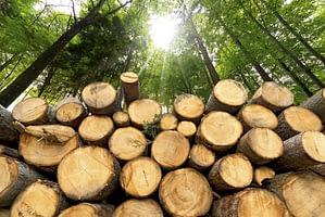 foreste - tronchi di alberi abbattuti