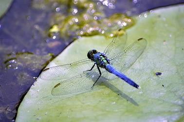 insetti d'acqua