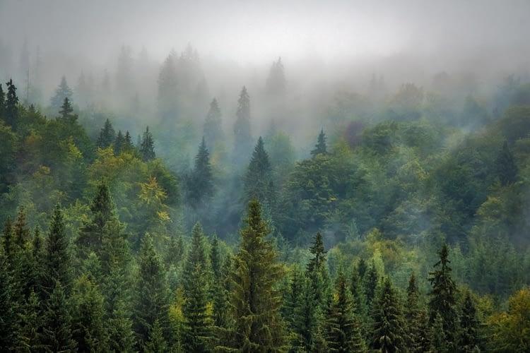 soluzioni ispirate alla natura nelle foreste