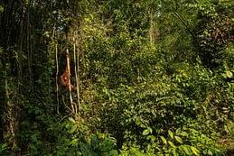ecosistemi a rischio, le foreste e gli animali