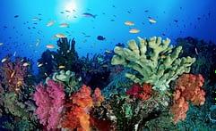 ecosistemi a rischio, gli oceani
