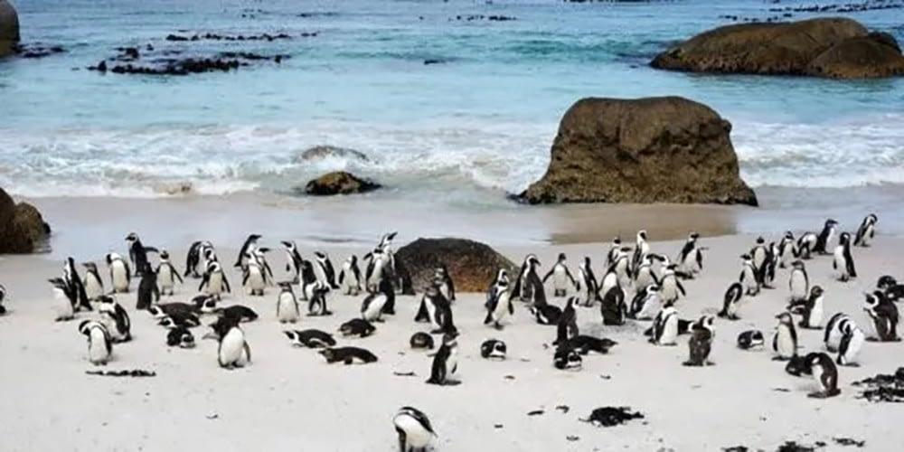 pinguini - carcasse-piene-di-punture