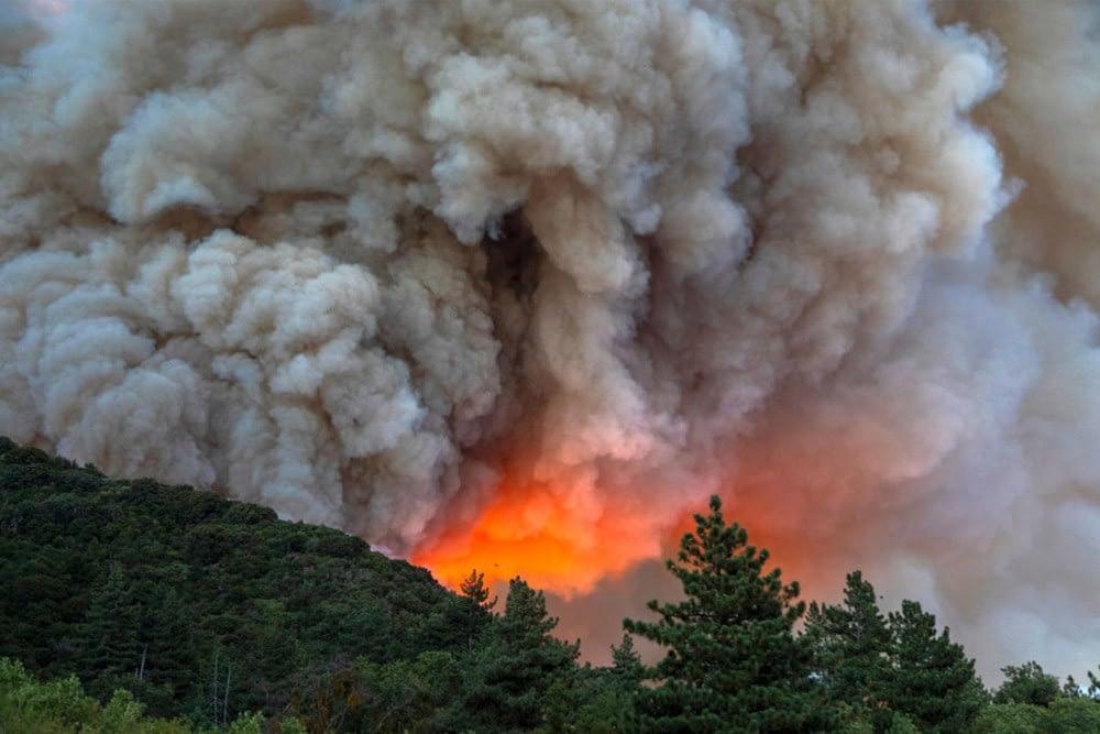 terrorismo ambientale - incendio boschivo doloso