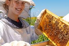 allevamento api