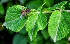 le api sono oltre 20mila specie