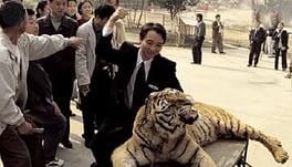 selfie con le tigri