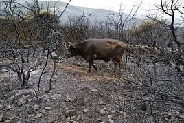 incendi boschivi e bandi europei