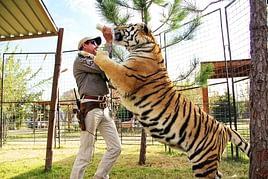 allevamento tigri