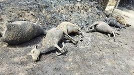 terrorismo ambientale - Anomali morti nel rogo di una fattoria nell'Oristano