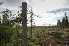 La deforestazione ha avuto un forte impatto negli ultimi decenni sui cambiamenti climatici