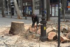 Taglio di alberi in città