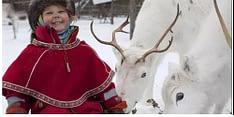 Il popolo Sàmi alleva le renne che prendono il nome dalla stessa etnia. Con l'abbattimento della foresta le renne Sàmi rischiano l'estinzione