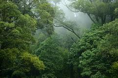 Armonia con la natura - l'uomo non riesce a soddisfare nessuno degli obiettivi della biodiversità di Aichi per fermare la distruzione della natura