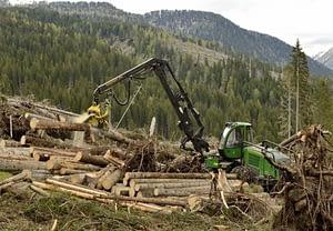 Taglio alberi - Tempesta Vaia