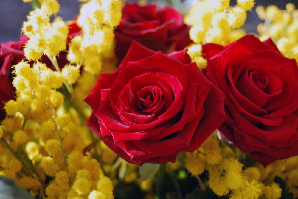 Rose e mimose